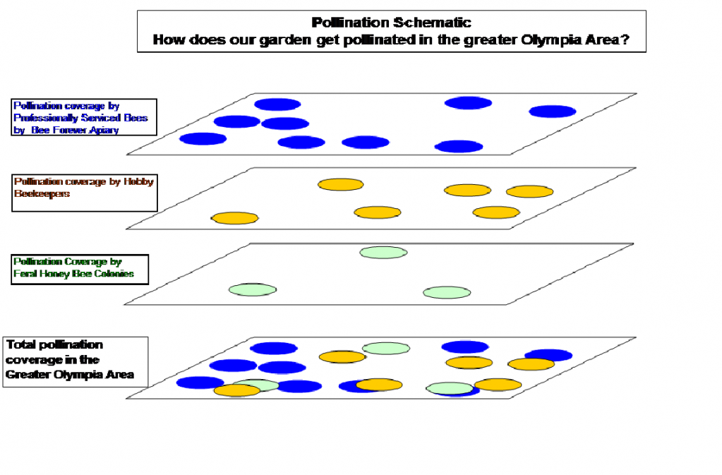 Pollination schematic showing the overlaying result of three contributing levels of pollinationf